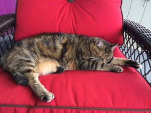 tabby cat sleeping on red chair