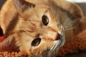 cat-636172_640