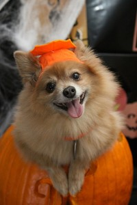 pom halloween