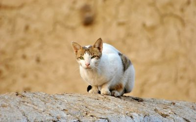 A Word About The Feral Cat Problem