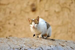 cat-72568_1920