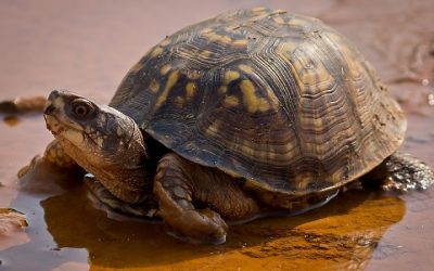 Help! I Found A Turtle In The Road!