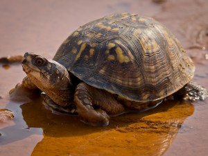 turtle-640842_960_720