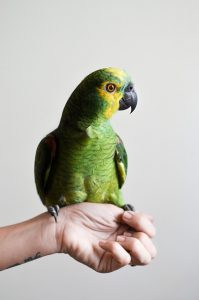 bird-1284082_640