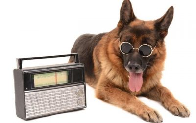 Should I Leave The Radio On For My Dog?