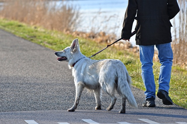 dog walker lower makefield