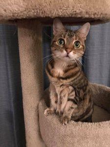 levittown cat sitter
