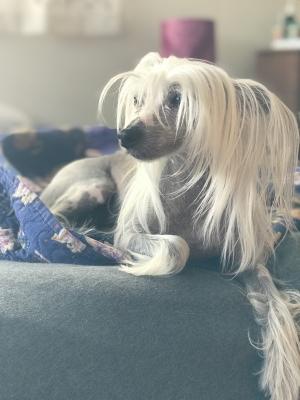 Rates - Professional Pet Sitting & Dog Walking | Levittown, PA
